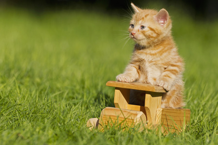 Germany,Ginger Kitten Sitting On Wooden Toy,Close Up