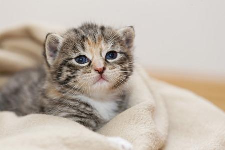 Germany,Kitten Sitting In Blanket,Close Up LANG_EVOIMAGES