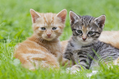 Germany,Kittens Sitting In Meadow,Close Up