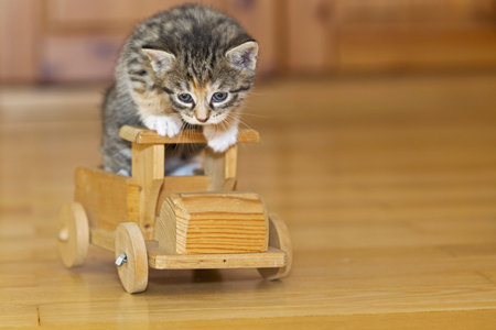 Germany,Kitten Sitting On Wooden Toy,Close Up
