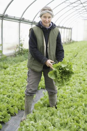escarola: Germany,Upper Bavaria,Weidenkam,Mature Woman Working In Greenhouse Of Endive