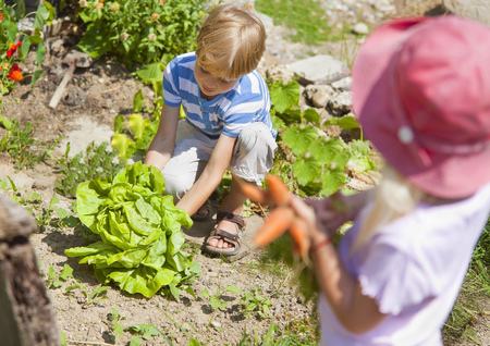 cowering: Germany,Bavaria,Boy And Girl Picking Vegetables In Garden