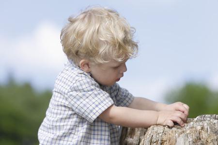Germany,Bavaria,Boy Exploring Tree Trunk,Close Up