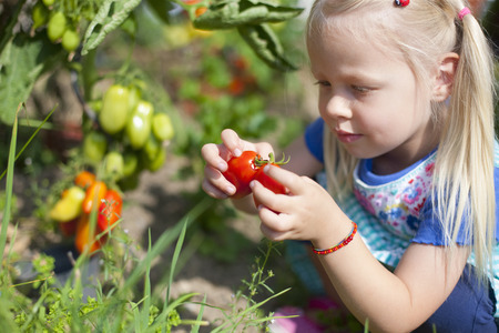 cowering: Germany,Bavaria,Girl Picking Tomatoes In Garden