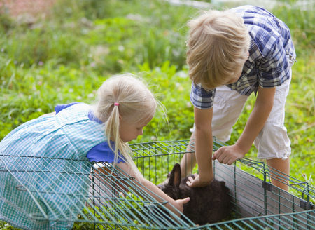 leporidae: Germany,Bavaria,Boy And Girl Petting Rabbit In Garden
