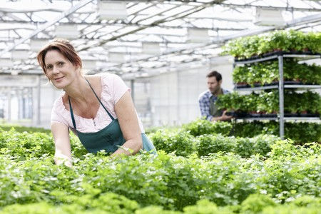 Germany,Bavaria,Munich,Mature Woman In Greenhouse Between Parsley Plants,Man Standing In Background