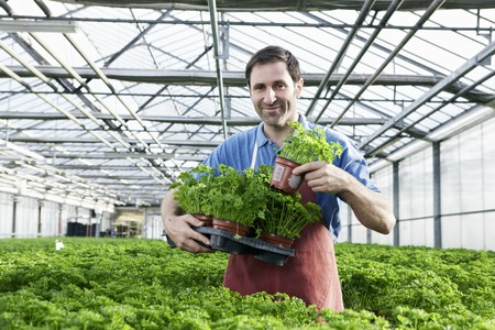 Germany,Bavaria,Munich,Mature Man In Greenhouse With Parsley Plants