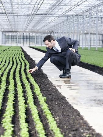 cowering: Germany,Bavaria,Munich,Mature Man Examining Seedlings In Greenhouse