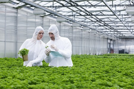 Germany,Bavaria,Munich,Scientists In Greenhouse Examining Parsley Plant