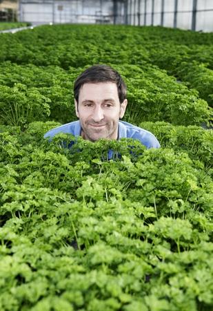 Germany,Bavaria,Munich,Mature Man In Greenhouse Between Parsley Plants