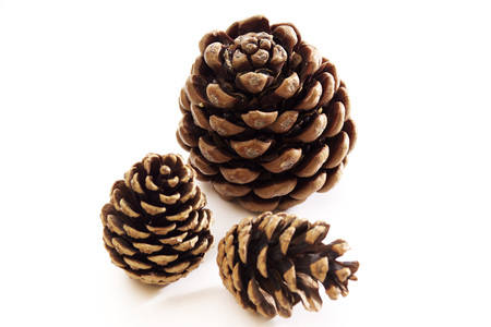 Pinecones, Close-Up LANG_EVOIMAGES