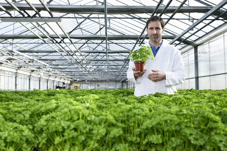 Germany,Bavaria,Munich,Scientist Standing Between Parsley Plant In Greenhouse