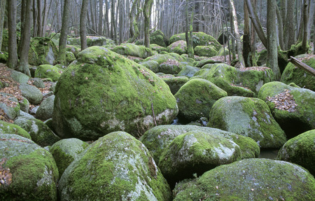 Germany, Bavarian Forest, Near Falkenstein LANG_EVOIMAGES