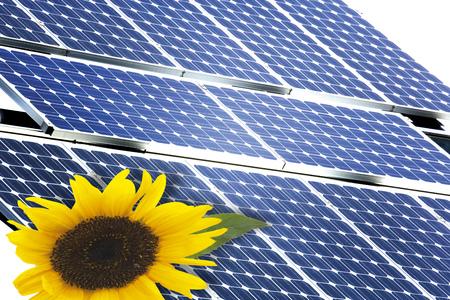 Sun Flower Against Solar Panels