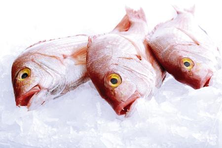 Fresh Fish, Giltheads LANG_EVOIMAGES