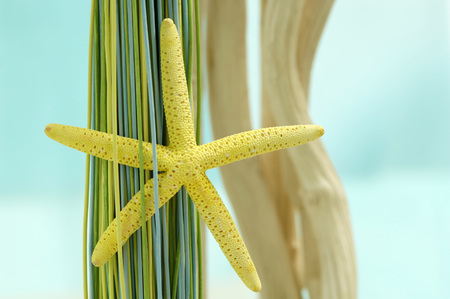 Seastar And Decoration Material LANG_EVOIMAGES