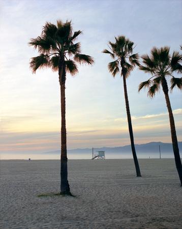 Usa, Palms On Los Angeles Beach