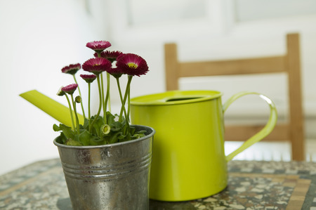 Red Daisies And Yellow Watering Can, Still Life