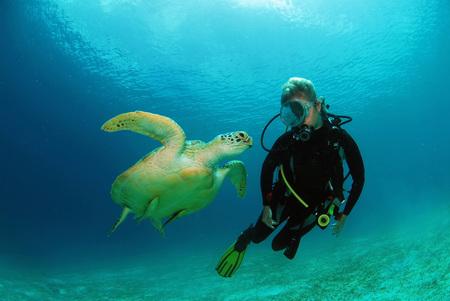 woman bath: Philippines,Scuba Diver With Green Sea Turtle,Underwater View