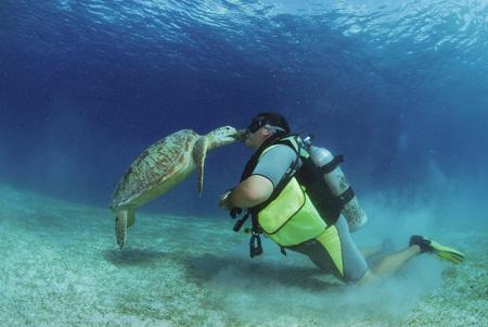 Philippines,Scuba Diver Kissing Green Sea Turtle,Underwater View