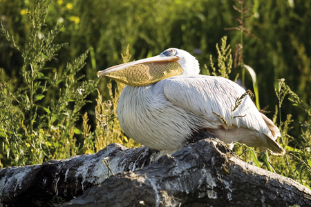 Germany, Gelsenkirchen, Zoom Erlebniswelt, Pelican