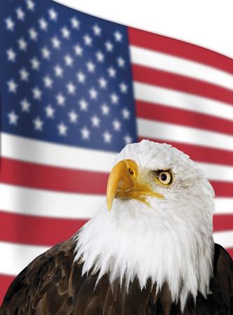enforce: Bald Eagle In Front Of Us-Flag