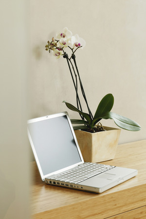 deposition: Orchid Plant And Laptop On Table, Close-Up
