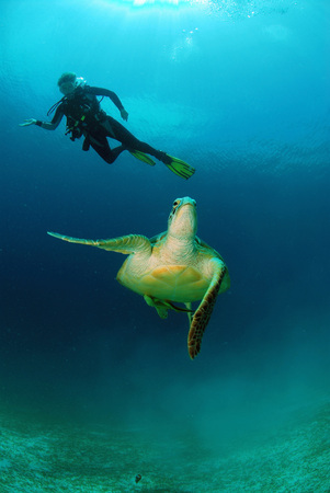 woman bath: Philippines,Diver With Green Sea Turtle LANG_EVOIMAGES