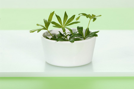 Woodruff In A Cup LANG_EVOIMAGES