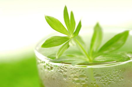 Glass Of Woodruff Tea, Close-Up LANG_EVOIMAGES