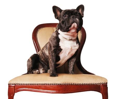 Perro sentado en la silla LANG_EVOIMAGES