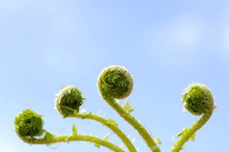 Annulated Fern Leaf, Close-Up