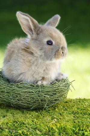 rabit: Rabbit Sitting In Nest, Close-Up