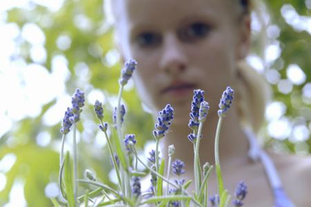 remedial: Fresh Lavender Flowers