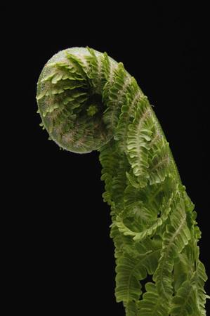 Leaf Of An Fern, Close-Up LANG_EVOIMAGES