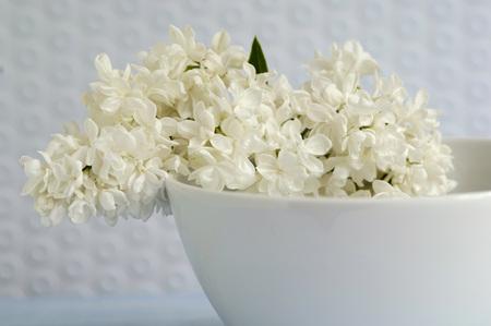 White Syringa In Bowl, Close-Up