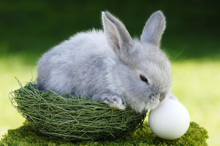 celebration: Rabbit Sitting In Nest, Close-Up