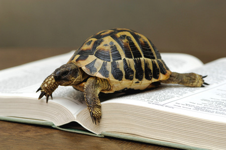 Turtle On Opened Book, Close-Up LANG_EVOIMAGES