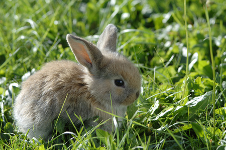 lapin: Rabbit In Meadow, Close-Up