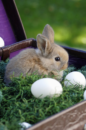 rabit: Rabbit Sitting In Nest