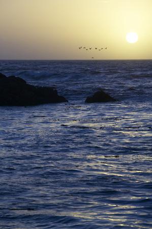 gloaming: Usa, California, San Francisco, Sunset At Sea