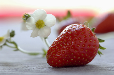 desk: Strawberry And Blossom, Close-Up LANG_EVOIMAGES