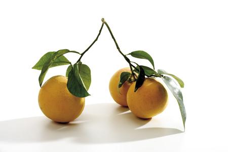 Branch With Grapefruits (Citrus Maxima), Close-Up