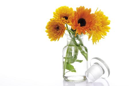 pot marigold: Marigold Flowers In Vase, (Calendula Officinalis), Close-Up