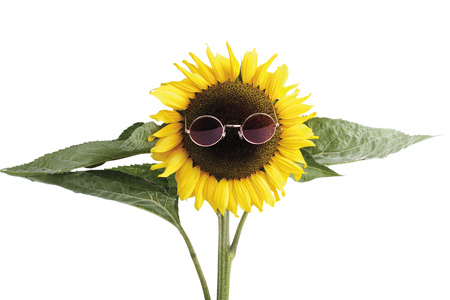 Sunflower With Sunglasses, Close-Up