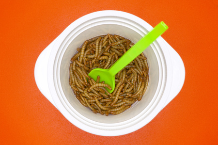 disgusted: Mealworms In Plastic Plate, Close-Up LANG_EVOIMAGES
