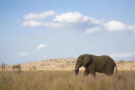South Africa, Krã¼Ger National Park, Elefant LANG_EVOIMAGES