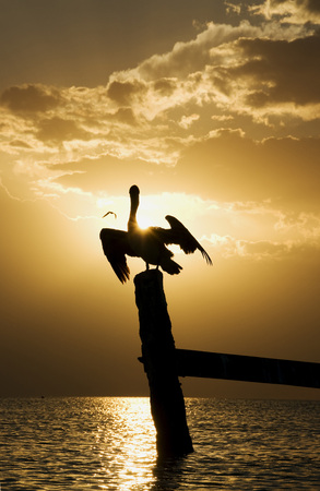 Mexico, Holbox Island, Pelican Sitting On Wooden Post In Ocean LANG_EVOIMAGES