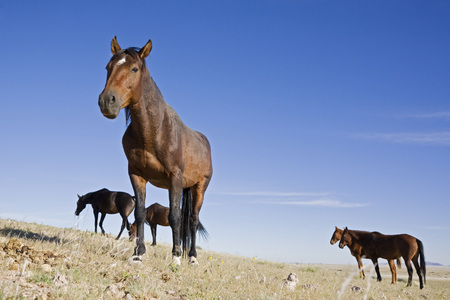Africa, Namibia, Aus, Wild Horses LANG_EVOIMAGES