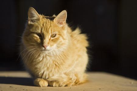 Cat, Close-Up, Portrait